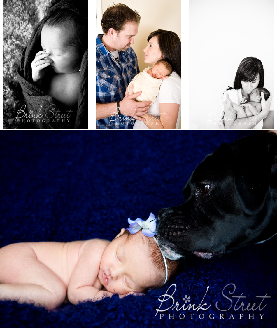 Highlands Ranch Newborn Photographer