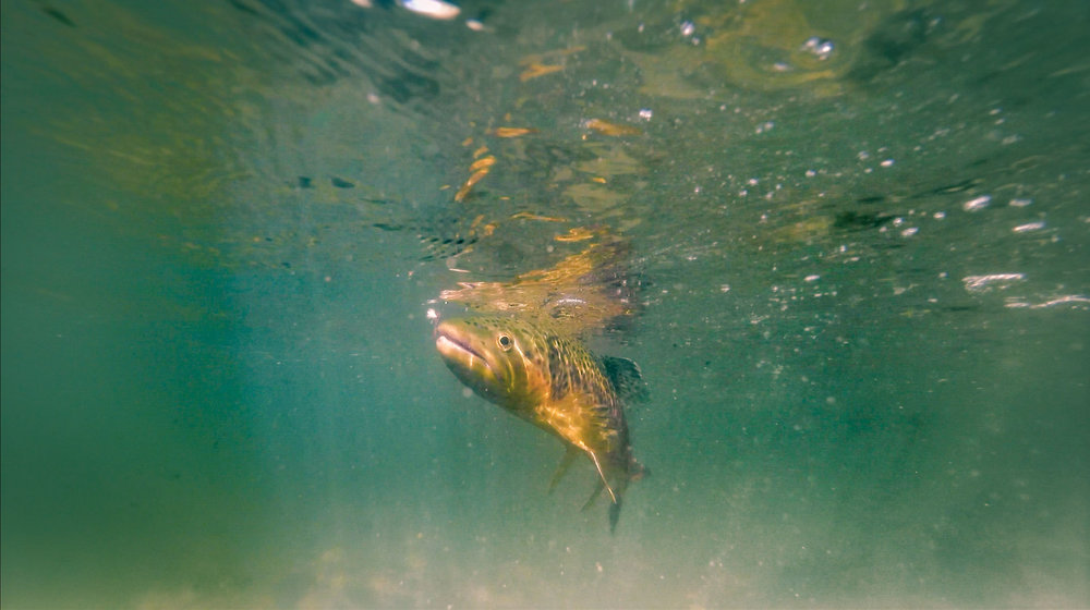 Fish and Hooking Fish.00_10_21_09.Still089.jpg