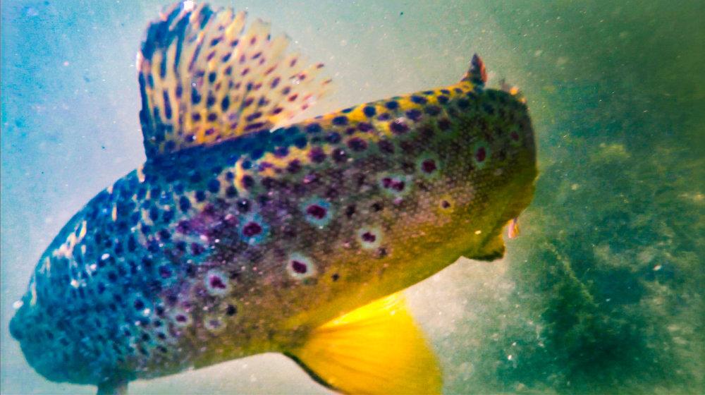 Fish and Hooking Fish.00_10_28_06.Still095.jpg