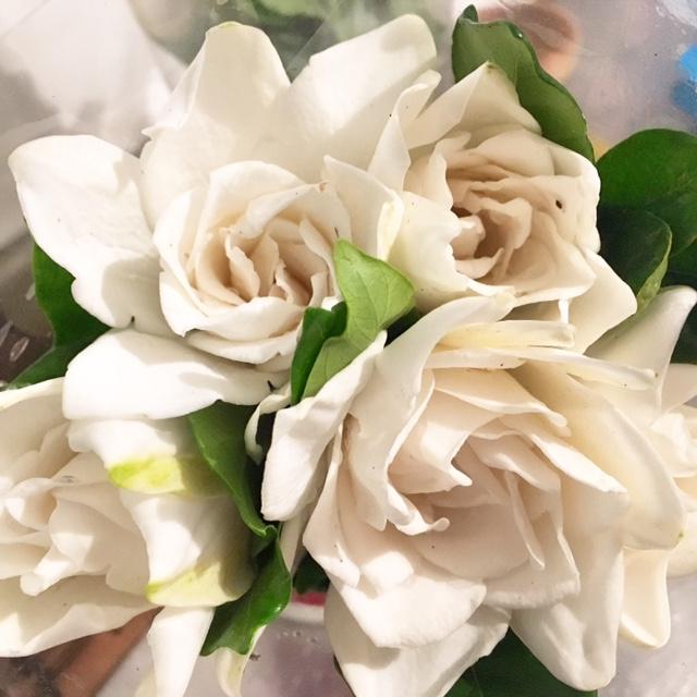 Gardenias by Frassai