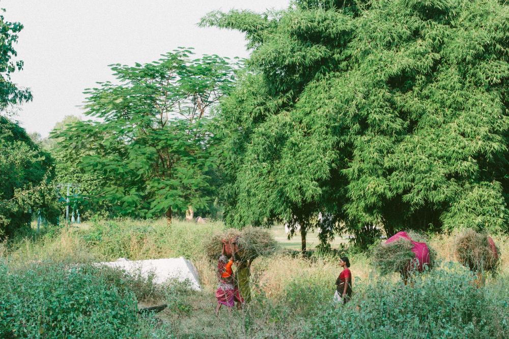 A&Y Videography - Uttarayan 2014-131.jpg