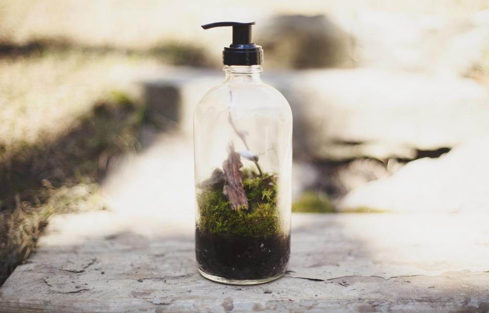 Moss garden.jpg