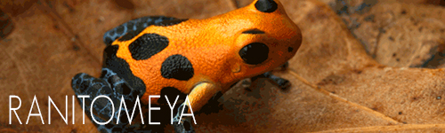 Ranitomeya-Indoor-Ecosystems-Understory-Enterprises
