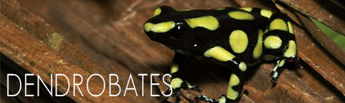 Dendrobates-Indoor-Ecosystems