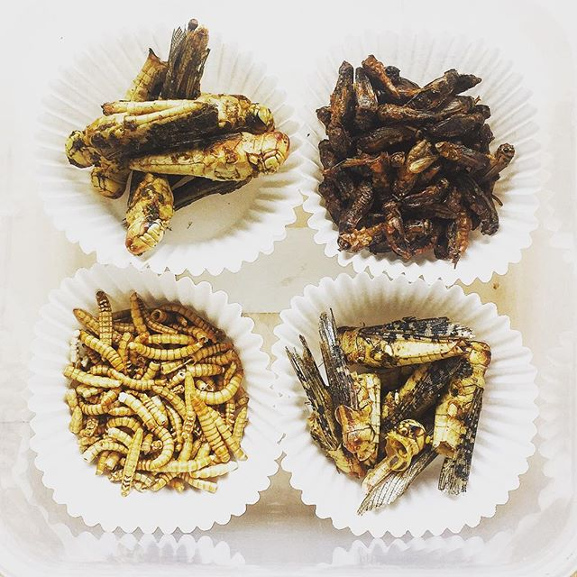 😛 #healthy afternoon snacks. Mealworm, grasshoppers, and crickets. Full of protein and crunchy goodness! . . . #sustainability #food #edibleinsects #eatbugs #cricketprotein #mealworm #eatbugs #foodofthefuture #foodoftheday #tasty #yummy #protein #entomo