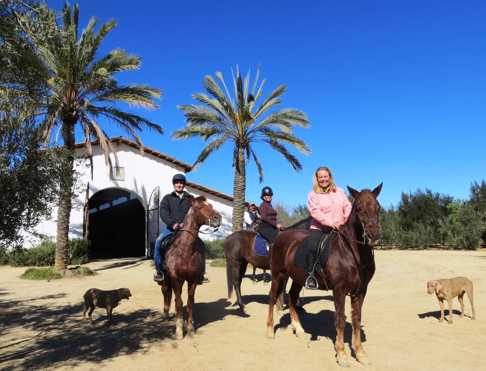 Adobe Guadalupe Azteca sporthorses