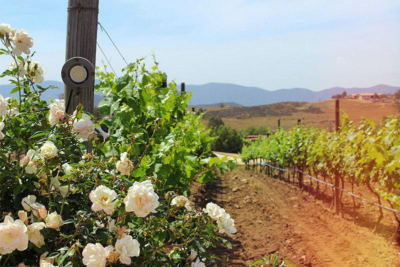 Mexico wine tours