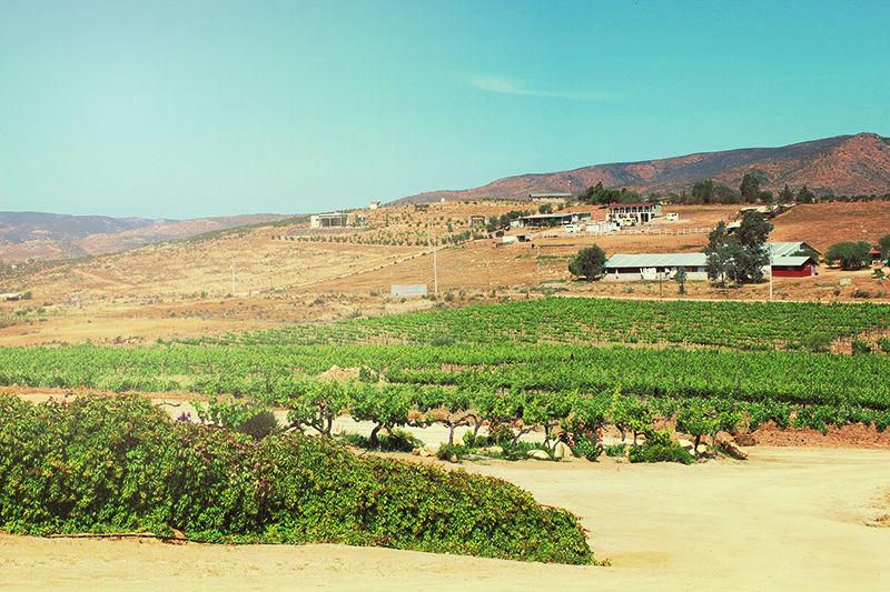 Valle de guadalupe tours