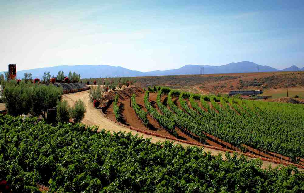 Valle de guadalupe experience