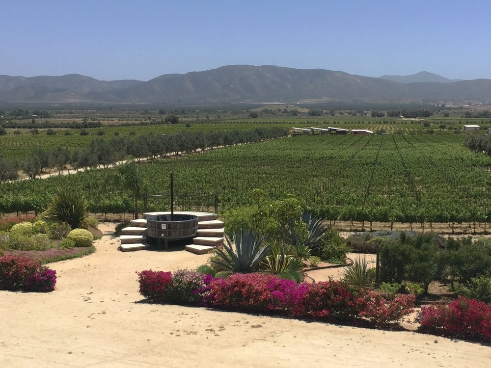 View from one of the wineries on our  Valle de Guadalupe  tour
