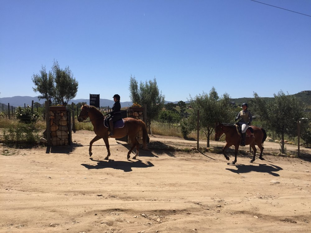 Horseback riding along the vineyards of a winery in Valle de Guadalupe