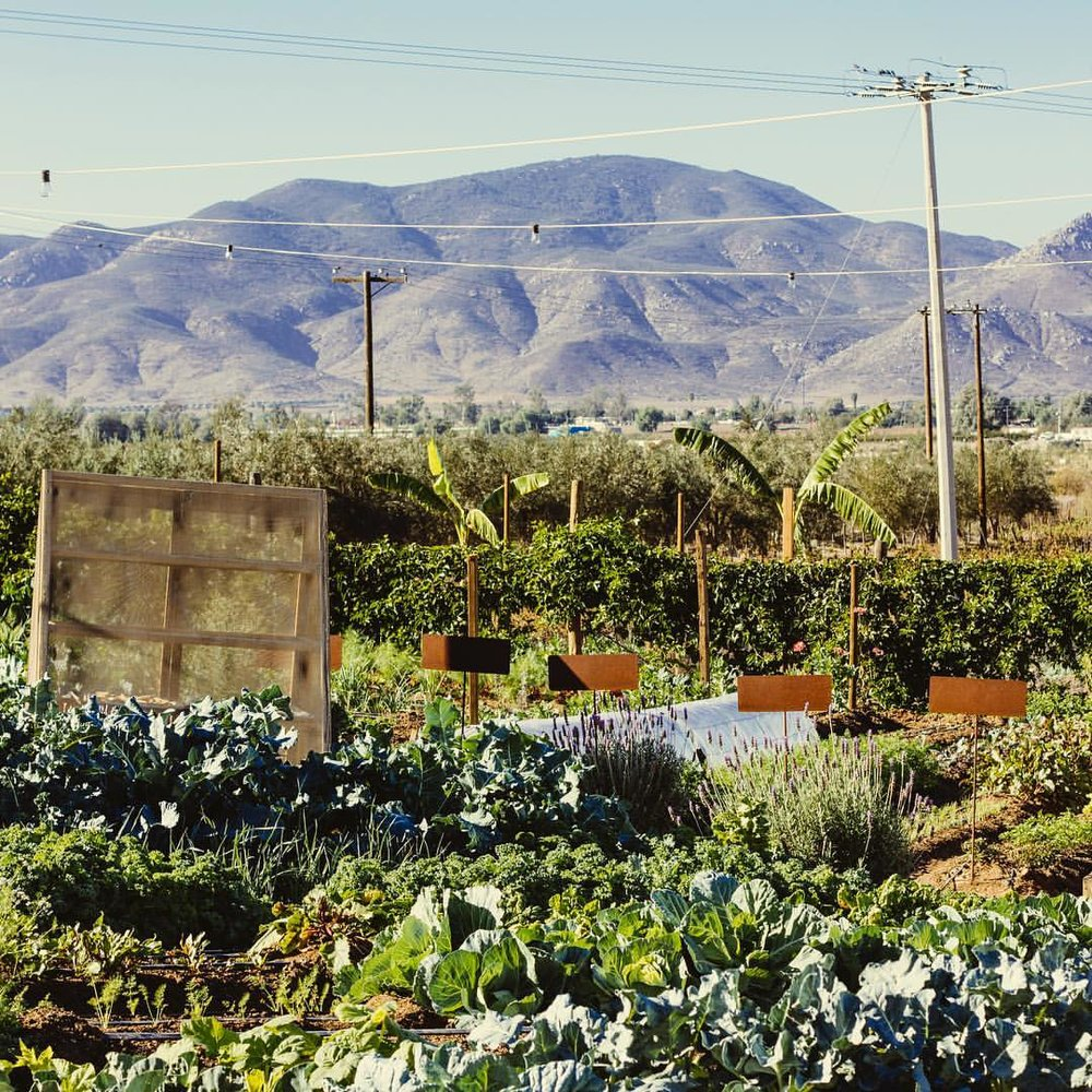 Finca Altozano's Organic Garden. Photo credit: LUPE