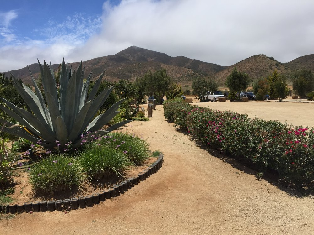 Just another beautiful day in Valle de Guadalupe