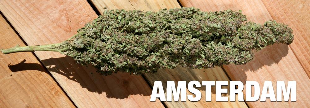 AmsterdamWinners.jpg