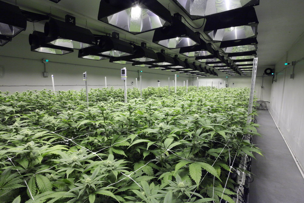 Live Grow Room 360 Online View