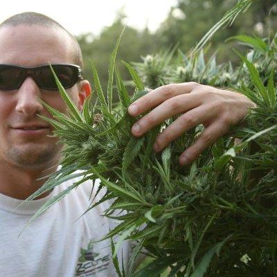 Chief Cannabis Officer Nico Escondido