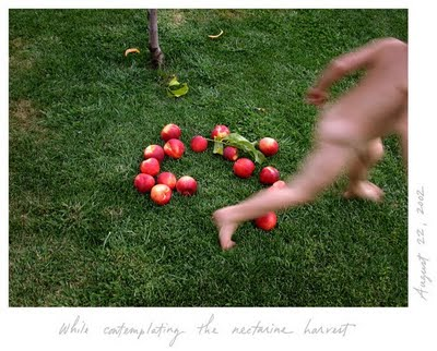Caption: While contemplating the nectarine harvest. August 22, 2002