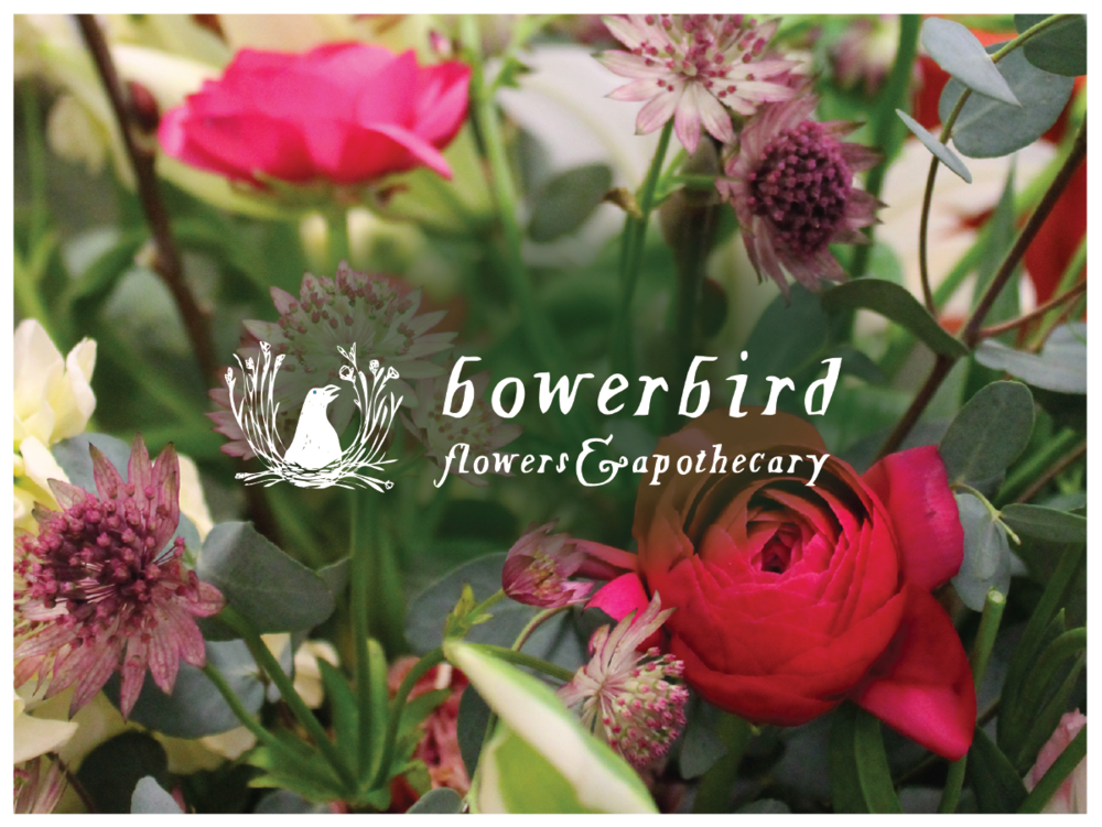 Logo for Bowerbird Flowers