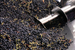 wine_crush-300x200.jpg