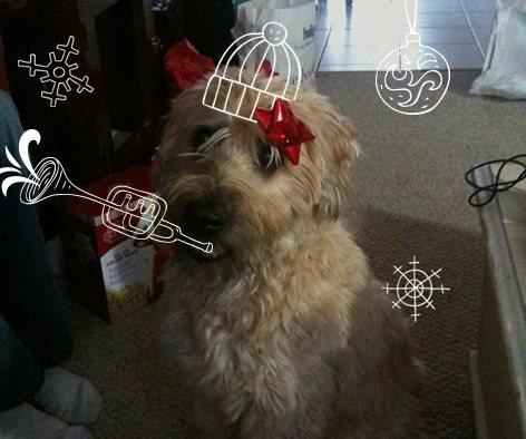 Christmas_Kealy.jpg