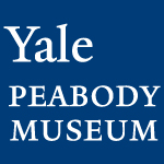 Yale Peabody Museum