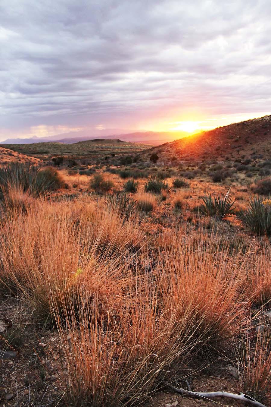 life lately & desert pictures // via darlingbebrave.com
