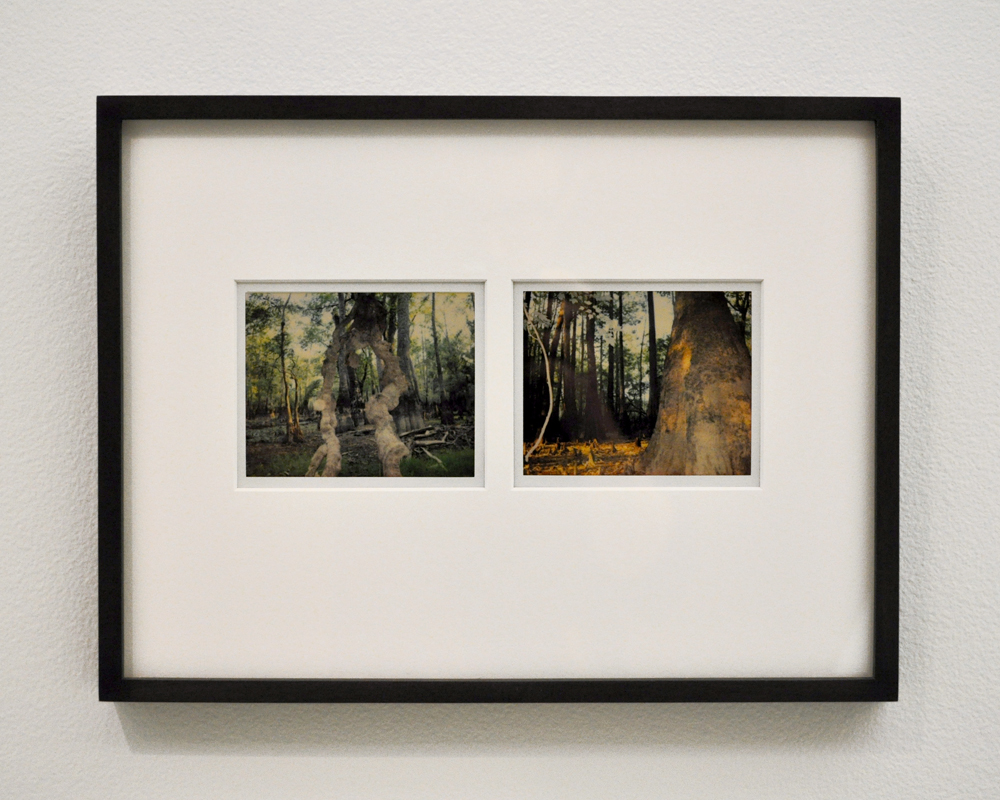 Stephen Vitiello,  Untitled (Lost Forest No. 13 and No. 9) , 2007-2010, Polaroids, 9 ½ x 12 ½ inches (framed), Courtesy of American Contemporary, NY.
