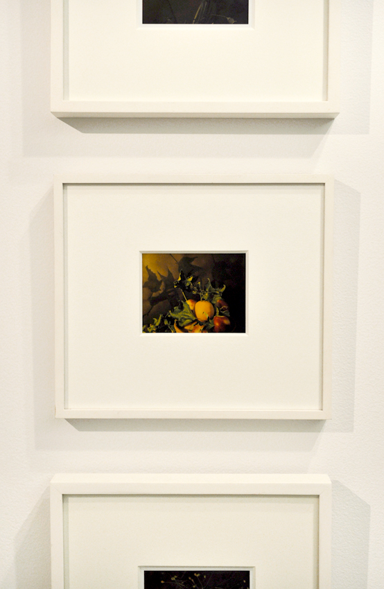 Miranda Lichtenstein,  Untitled #1 (fruit) , 2002-05, Polaroid, 4 3/16 x 5 3/16 inches, Courtesy of the artist and Elizabeth Dee, NY.