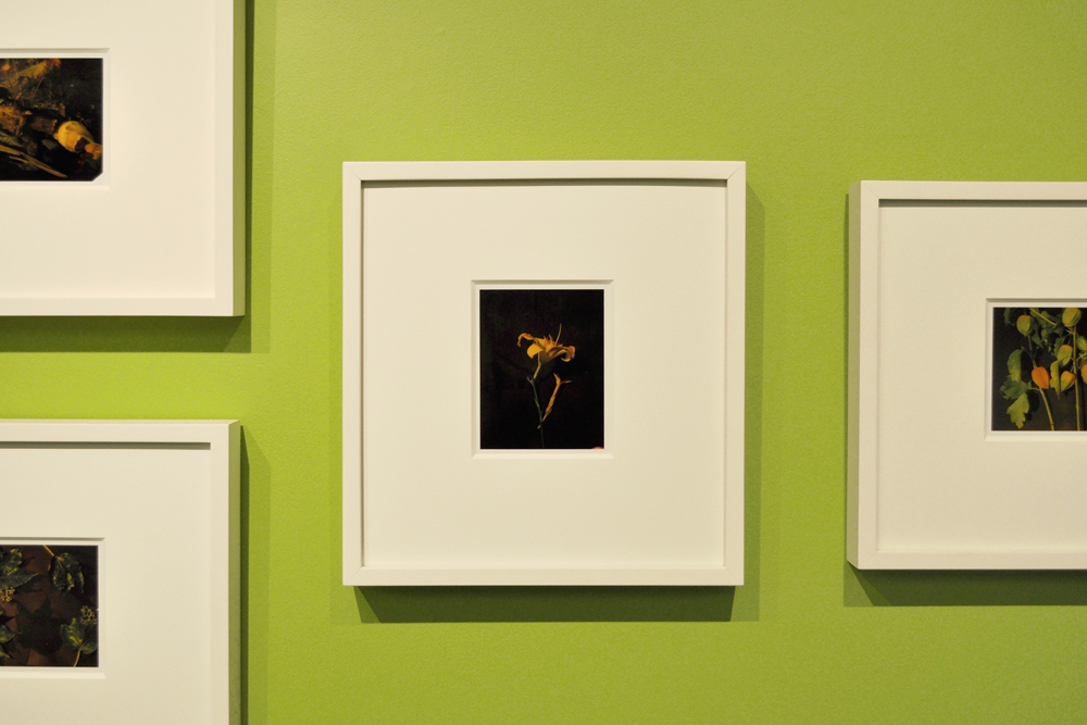 Installation view of Miranda Lichtenstein's polaroids.