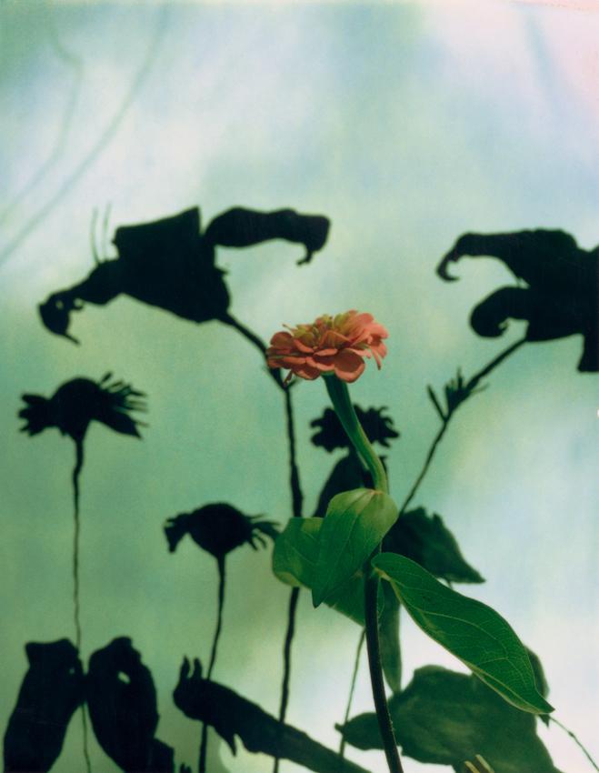 Miranda Lichtenstein,  Untitled #8 (flower) , 2002-05, Polaroid, 4 3/16 x 5 3/16 inches each, Courtesy of the artist.