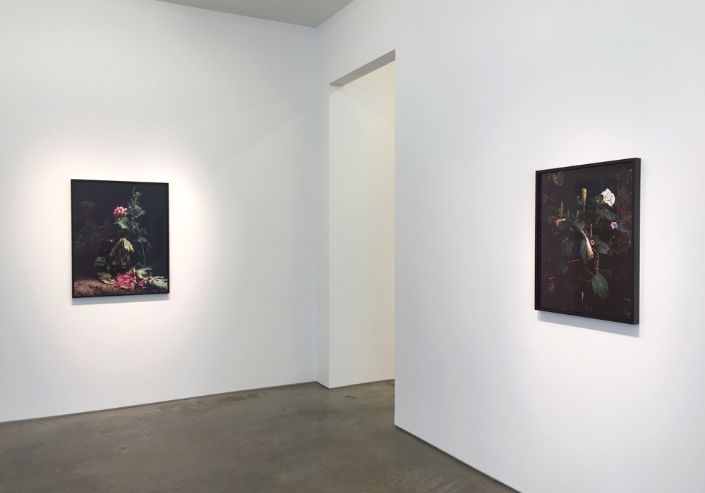Top: Untitled #4, 2015, Archival pigment print, 30 x 20 inches, Ed. of 7; Bottom: Installation view with Untitled #1 and Untitled #11, Sharon Core, Understory, Yancey Richardson Gallery, NY. (Photos: Chris Murtha)