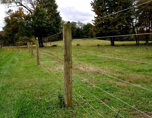 Fencing — Marshall Line Fence