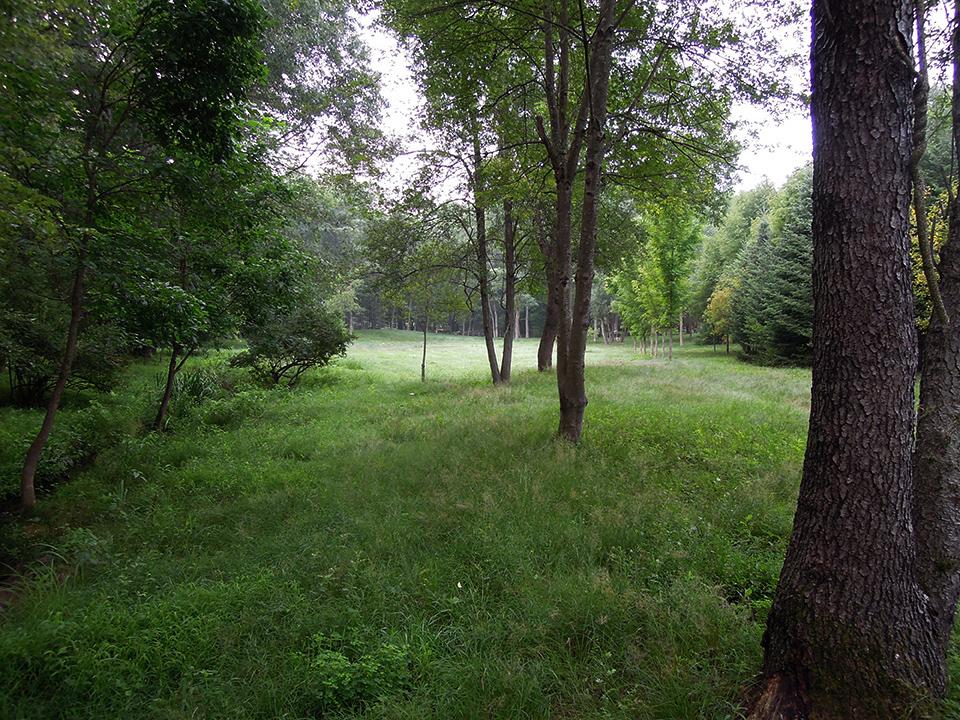 Meadow_10.jpg