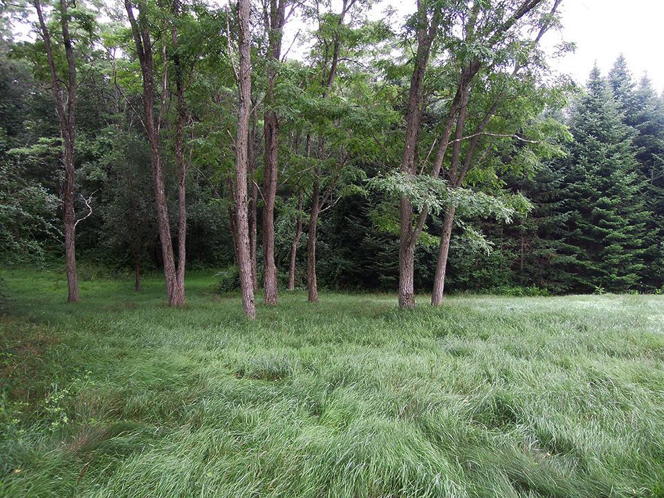 Meadow_12.jpg