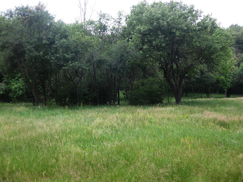 Meadow_15.jpg