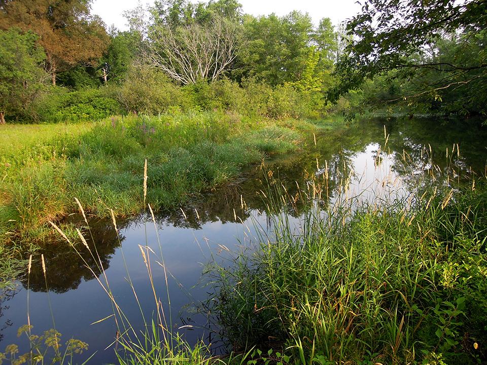 Pond_2.jpg