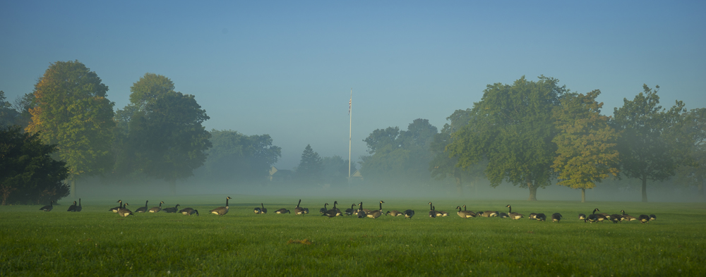 The Geese on the Parade Grounds