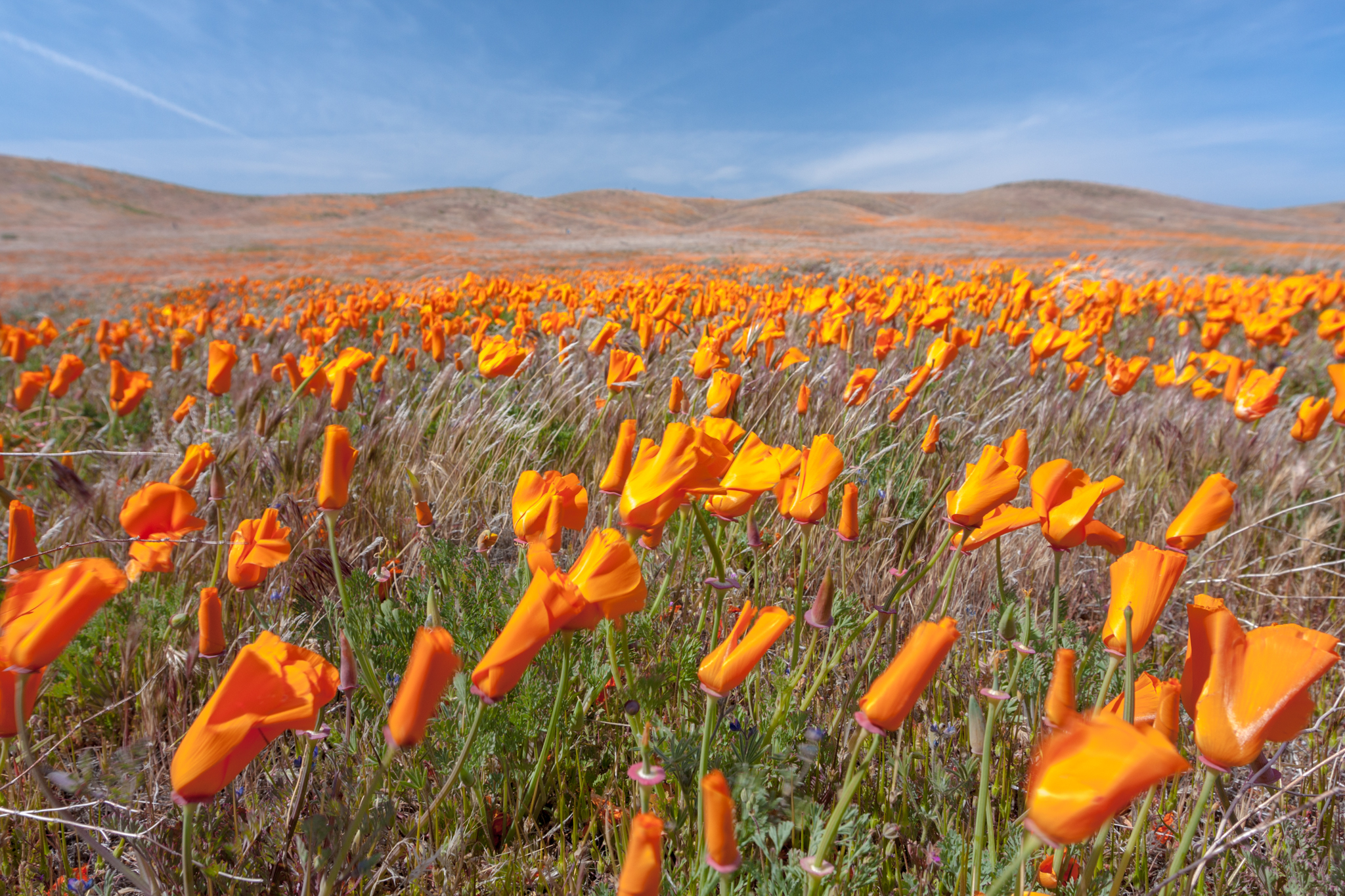 Antelope valley poppy reserve is a great place to photograph. It's probably the most flowers I've seen in one location. Timing is crucial and checking the conditions before heading to the reserve is highly recommended.