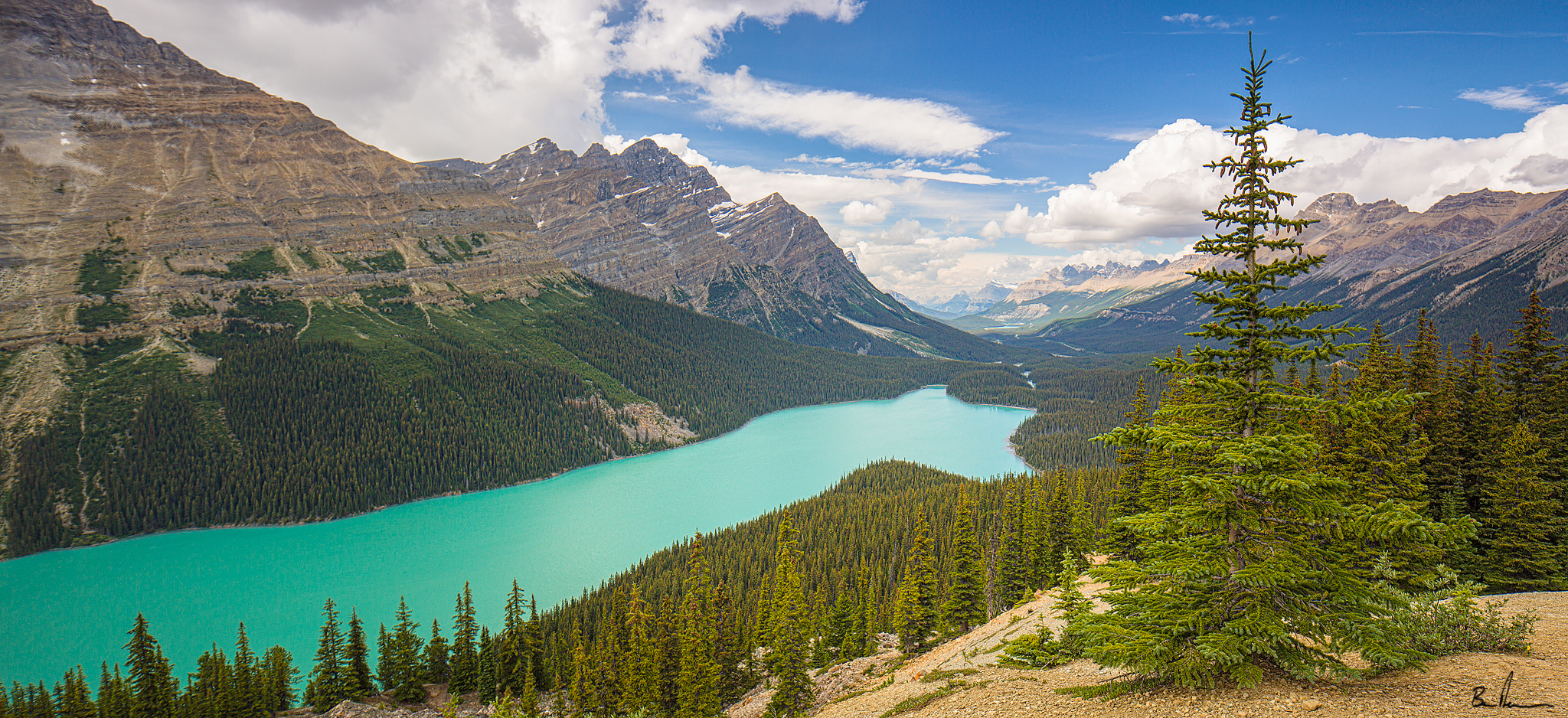 An early afternoon shot of Peyto lake in Banff National Park in Alberta Canada.