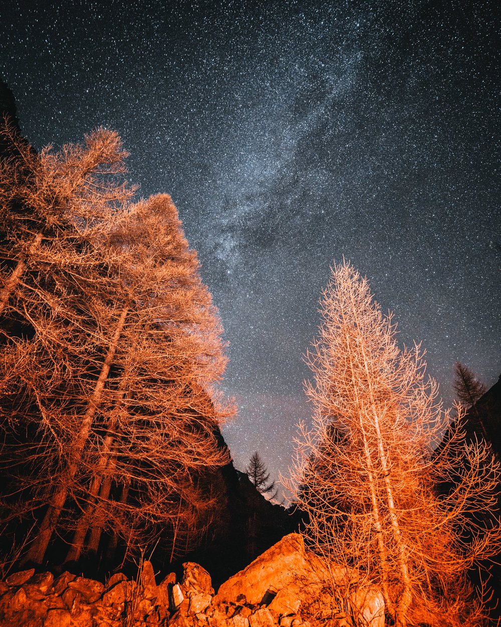 Cielo stellato sopra foresta