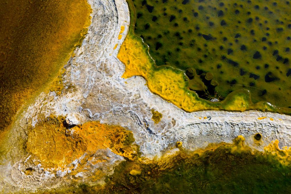 cyanobacterial-mats-yellowstone_15374992770_o.jpg