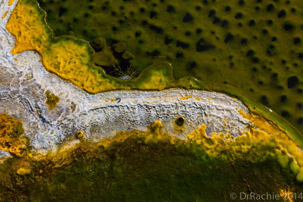 Cyanobacterial crusts