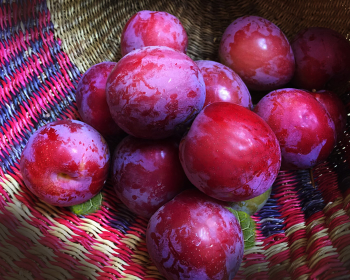 plums_basket.jpg