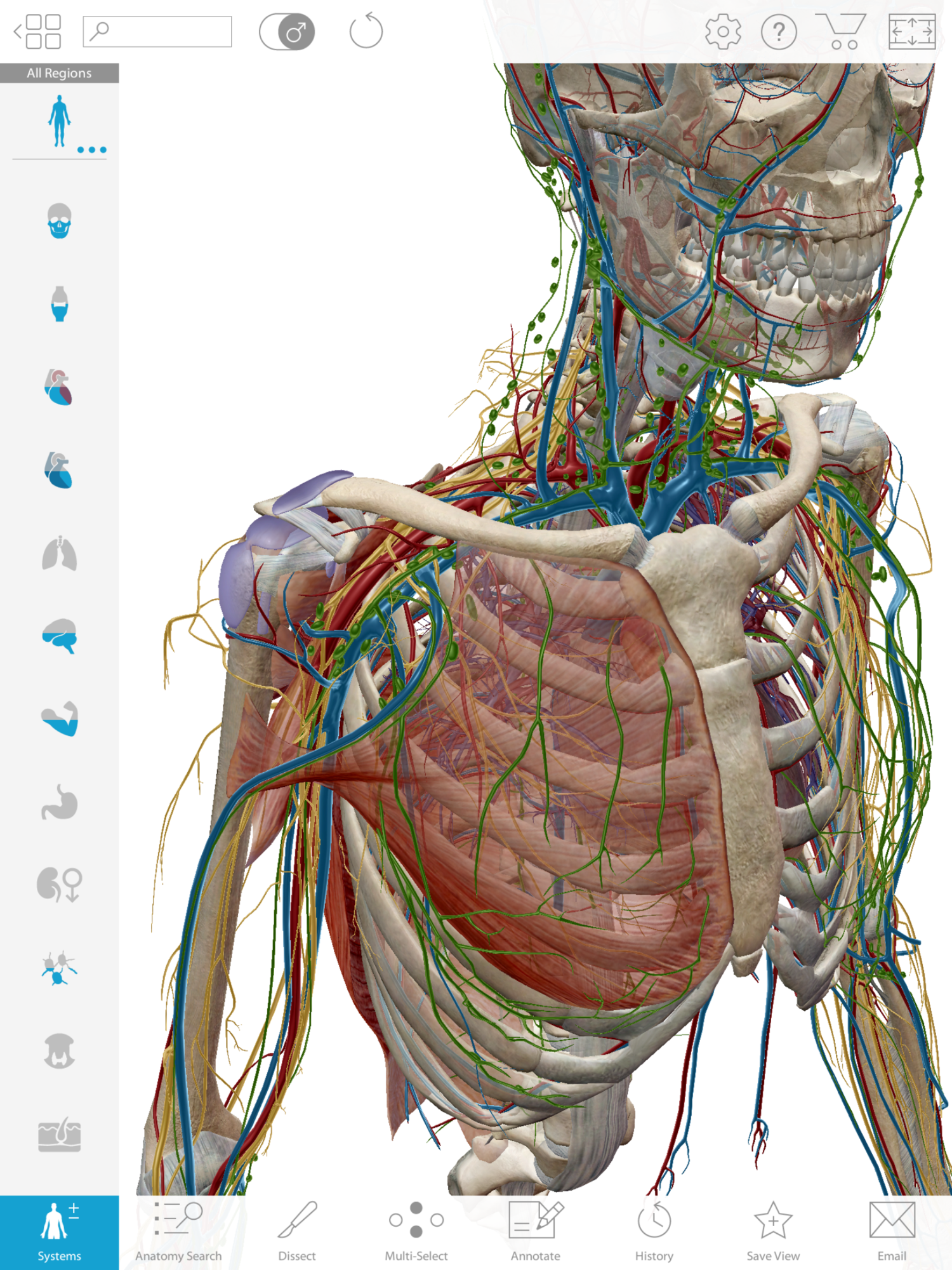 The 10 Best Resources To Learn And Master Dpt School Anatomy
