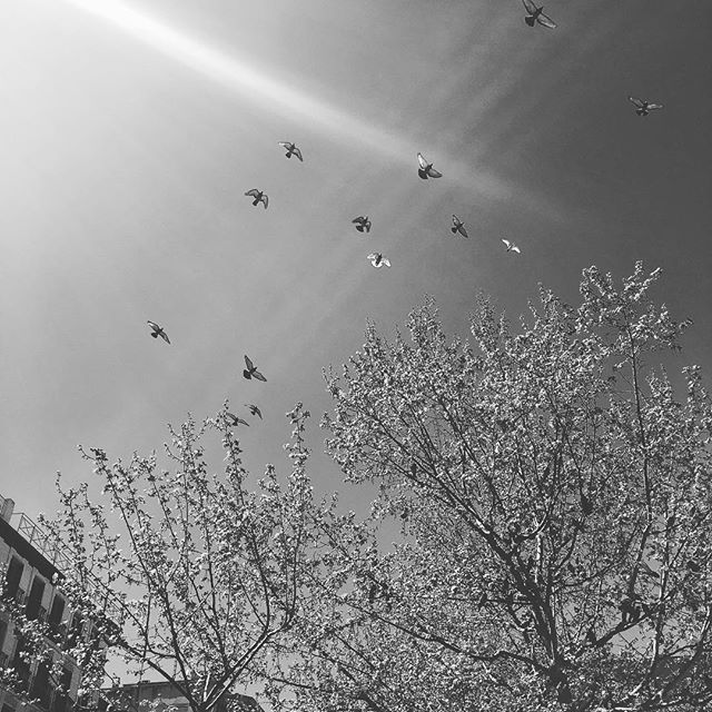 """The brave man is not he who does not feel afraid, but he who conquers that fear"" Mandela • • • #photography #photographer #photooftheday #spain #sky #skyporn #tree #treestagram #nature #naturelovers #naturephotography #birds #birdstagram #bnw #bnw_city #bnw_life #photoofthesky #anotherplanet #moments #jj_creative"