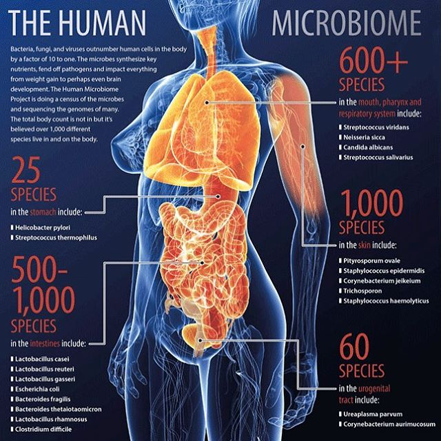 So I got my Viome.com results. Results that are specific to your own, unique biology!  What sets them apart from other gut sequencing companies out there, is that these guys look at the function of the bacteria, funghi and viruses in your gut by sequencing RNA. They also send you a glucose powder to look at your metabolic efficiency, and in a mattter of a month, you get your results (food recommendations included) on your smartphone, via the Viome app.  I AM SO EXCITED FOR MY RESULTS. MY TOP SUPERFOODS?  SPINACH AVOCADO BEEF ARUGULA KALE I've always known. I'm a meats and veggies kinda guy. My body strongly dislikes too many carbs since I was in my early 20's. Bread, beer, rice, pasta, etc made me feel like crap. No problem with that when you have loads of delicious and seasonal vegetables, fish, seafood, meats and poultry.  Here are some screenshots of my results. On top of the food recommendations, Viome also gives you a couple recommendations for probiotics. This is so exciting and game-changing for me, not only because of my own intolerances to certain foods, but also for clients I cook for. It takes the guess work out of the equation. Results unique to your own, unique biology? F*ck yeah!  I AM SO EXCITED ABOUT THIS THAT YOU CAN GET A 10% DISCOUNT WITH MY CODE BEYONDFOOD77 ON VIOME.COM WHEN YOU ORDER YOUR KIT. THEY MAKE SENDING YOUR STOOL TEST SUPER EASY.  ENJOY CONNECTING TO YOUR GUT FEELINGS.  Full link to blogpost and screenshots of my results in bio 👆🏼 #microbiome #viome #gut #health #unique #personalized #medicine #secondbrain #guthealth #superfoods #rna #sequencing #biohacking #science #bacteria #virus #funghi