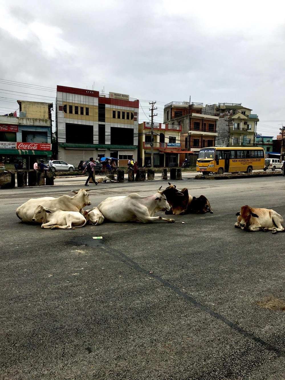 Cows casually pass time in the middle of the busy road. In Hindu culture, cows are considered sacred.