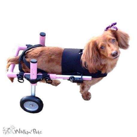 Front Vest for Walkin' Wheels Wheelchair     https://www.handicappedpets.com/walkin-small-front-vest/