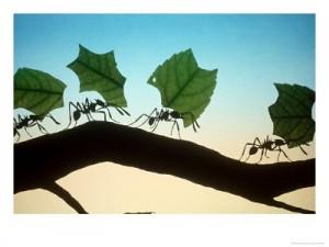 Ants leaf