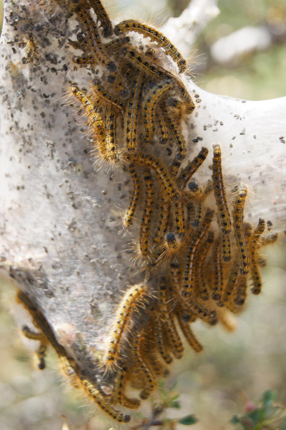 Weird caterpillars (?) flailing in distress